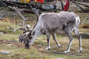2019 TJU Hoch im Norden Svalbard-265_klein
