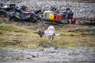 2019 TJU Hoch im Norden Svalbard-266_klein