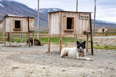 2019 TJU Hoch im Norden Svalbard-276_klein