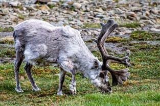 2019 TJU Hoch im Norden Svalbard-295_klein