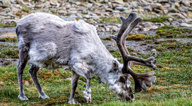 Neulich in Svalbard