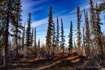 2019 tju hoch im norden kanada-107_klein3081705526907080863..jpg