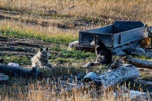 2019 tju hoch im norden kanada-139_klein2420112431900313674..jpg